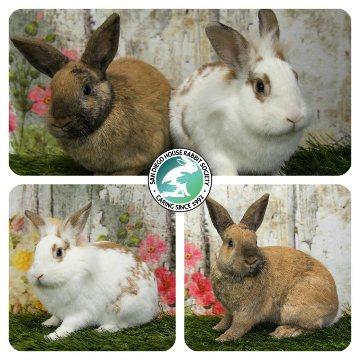 Featured Rabbit
